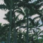 Miami 80's